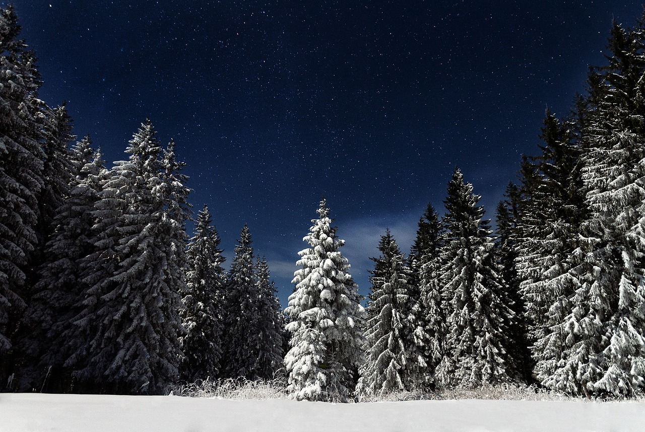 starry night above the pine tree forest covered in snow